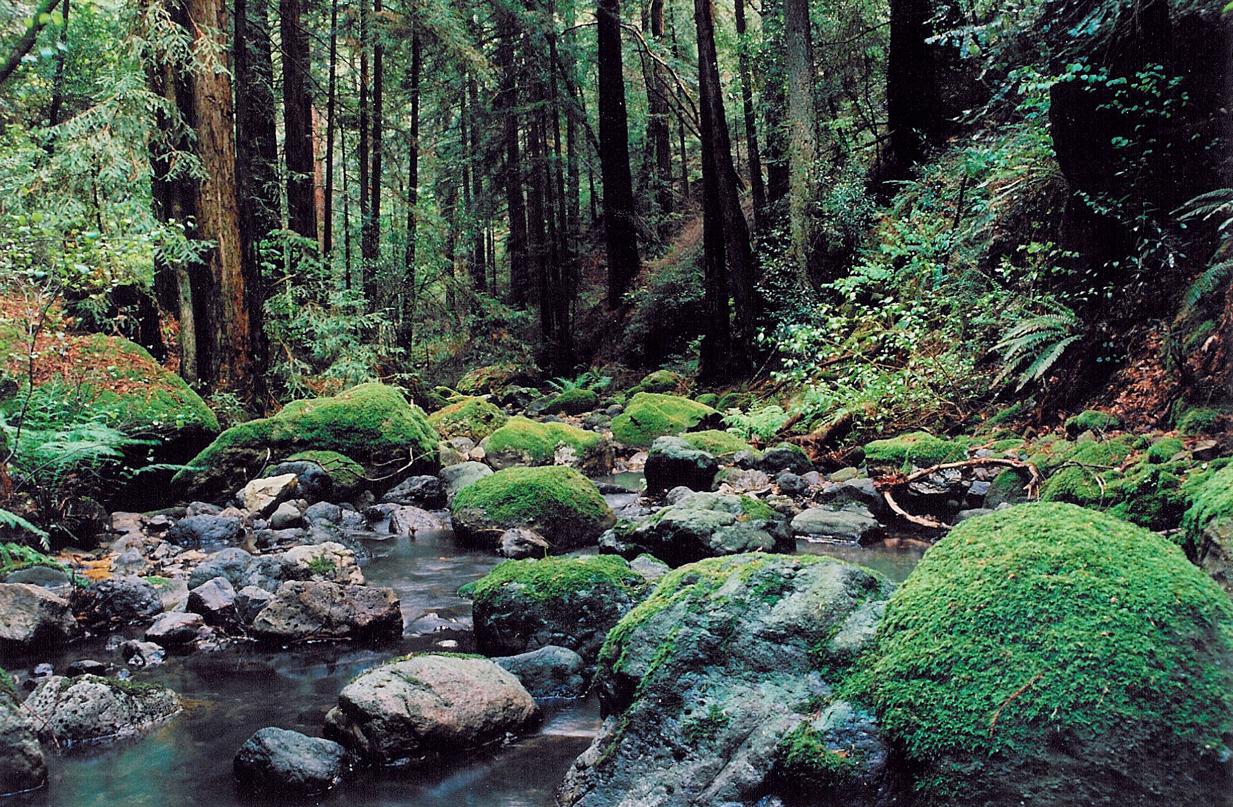 alicejanekubler_redwood creek - #gohikenapa