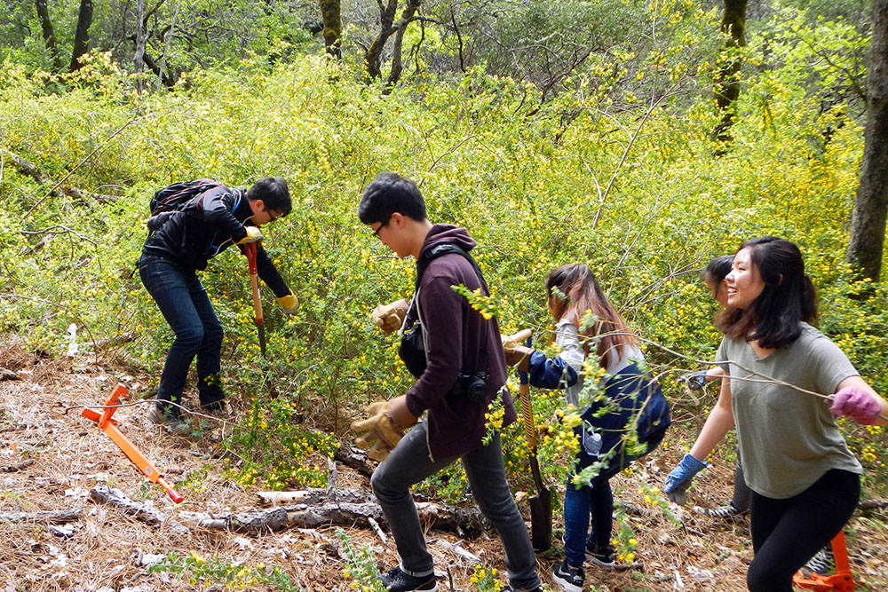 PUC students help clear French broom