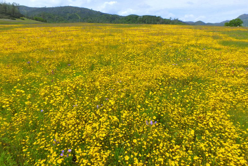 Another great year for restoration and wildflowers on Missimer Preserve