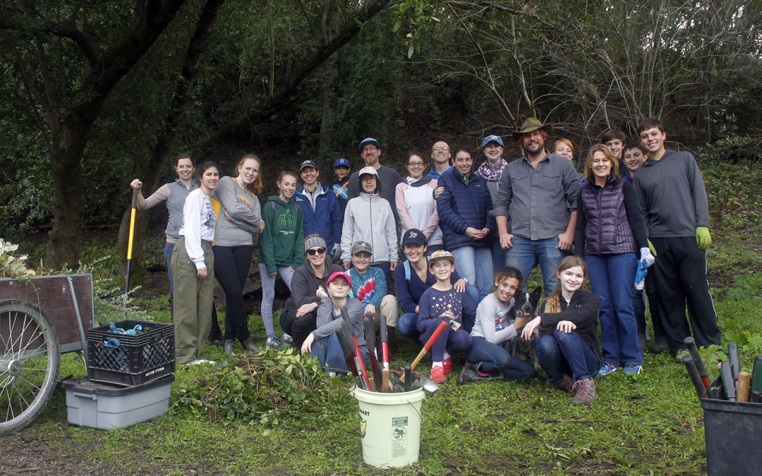 Soft dirt and a big group makes weed pulling easy on MLK Day