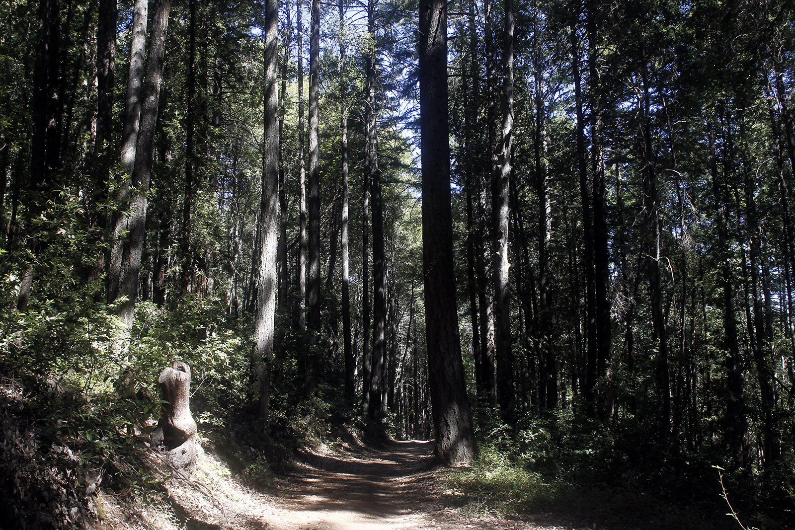 PUC_forest_webpic2