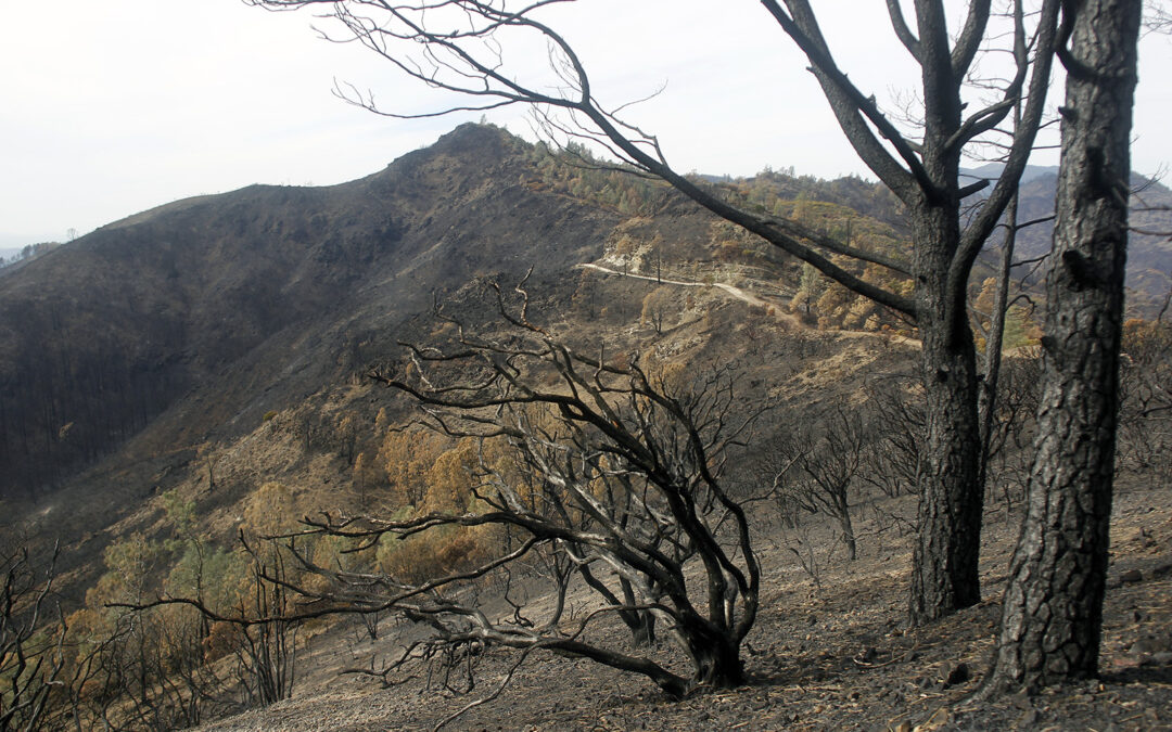 Land Trust moving forward with stewardship and restoration plans on wildfire affected properties