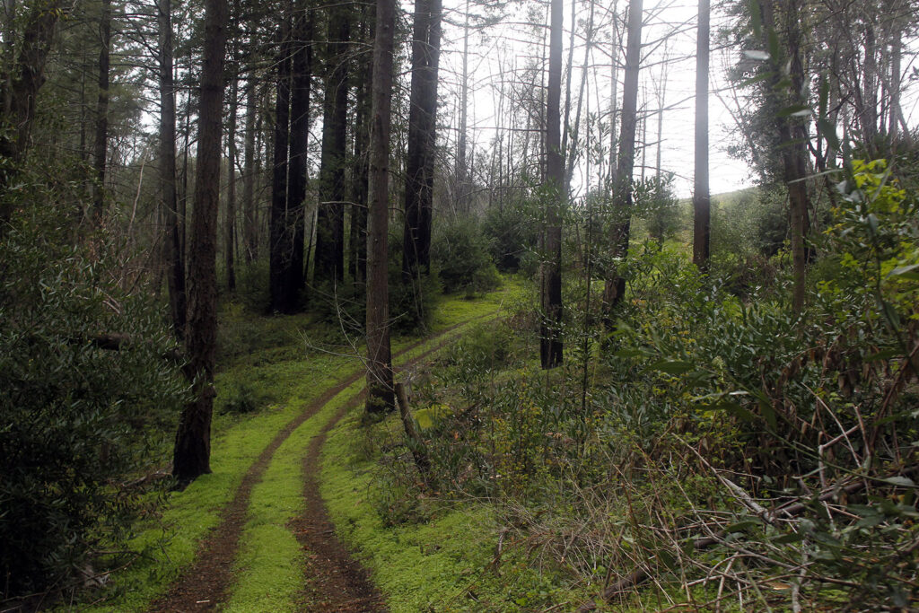 With its latest acquisition, Land Trust of Napa County increased the size of one of its most popular preserves: Archer Taylor Preserve. Photo by Jorgen Gulliksen – Land Trust of Napa County.