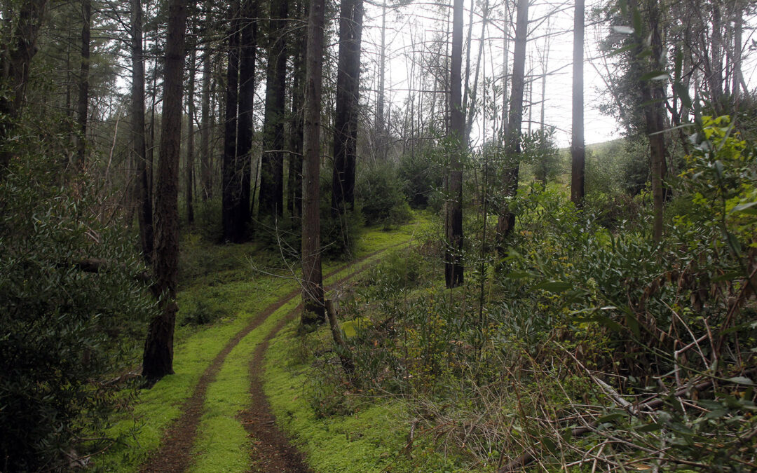 Land Trust adds to Archer Taylor Preserve