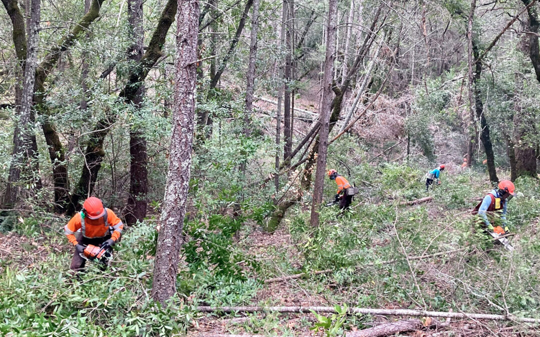 Napa Firewise, Land Trust and Angwin Fire Safe Council creating mile long fuel break in Angwin