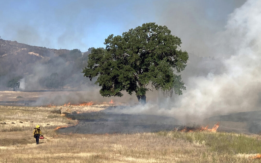 Video of Missimer Preserve controlled burn now on YouTube